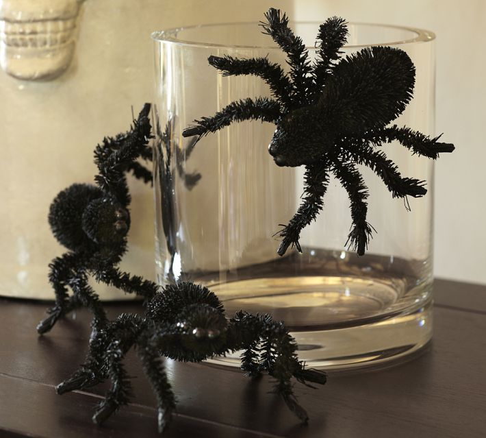 Spider on Glass in Halloween