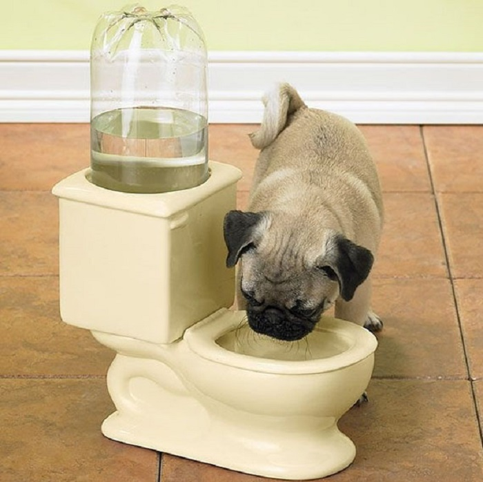 Creative Water Bowl For Pets