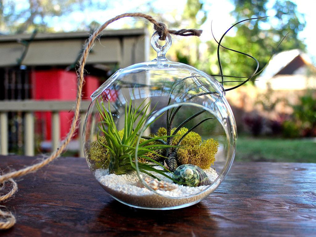 10 beautiful plant terrariums home designing. Black Bedroom Furniture Sets. Home Design Ideas