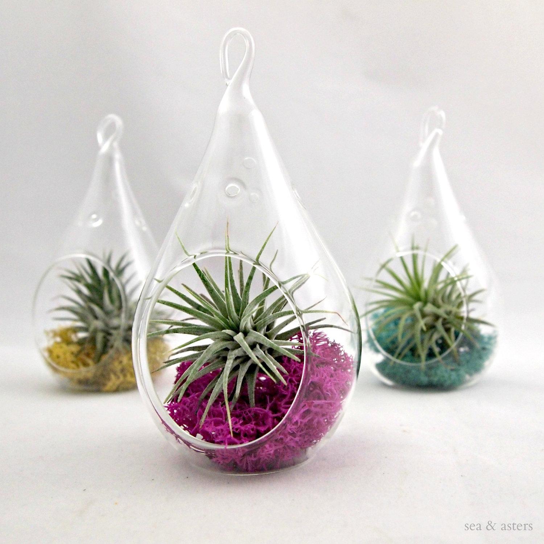 Hanging Pear Shaped Plant Terrarium Container