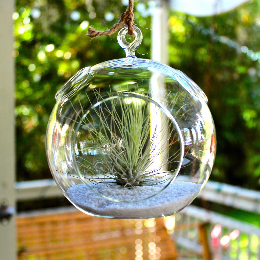 Hanging Plant Terrarium