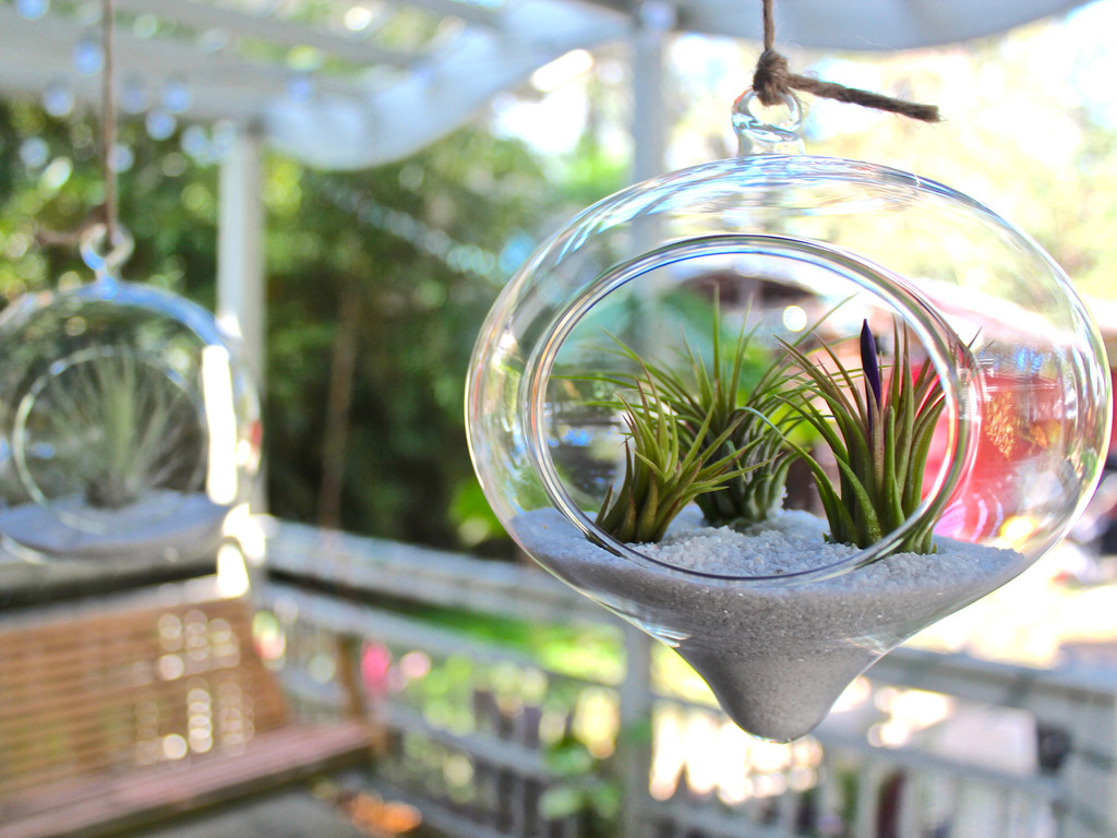 Orange Shaped Hanging Terrarium