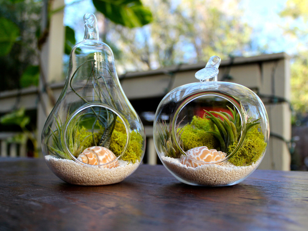 Pear and Apple Shaped Plant Terrarium