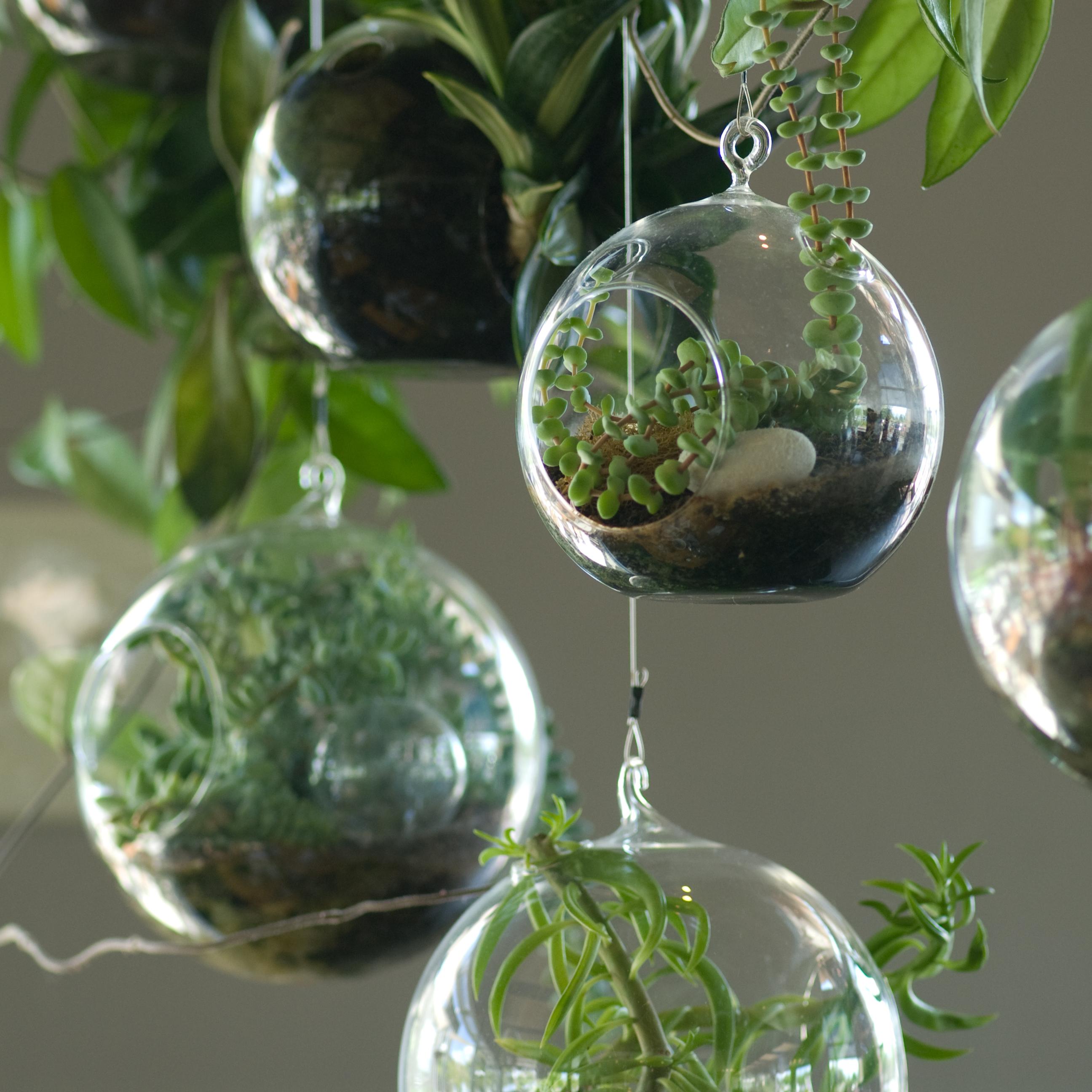 Plant Terrarium Hanging