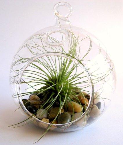 Round Plant Terrarium