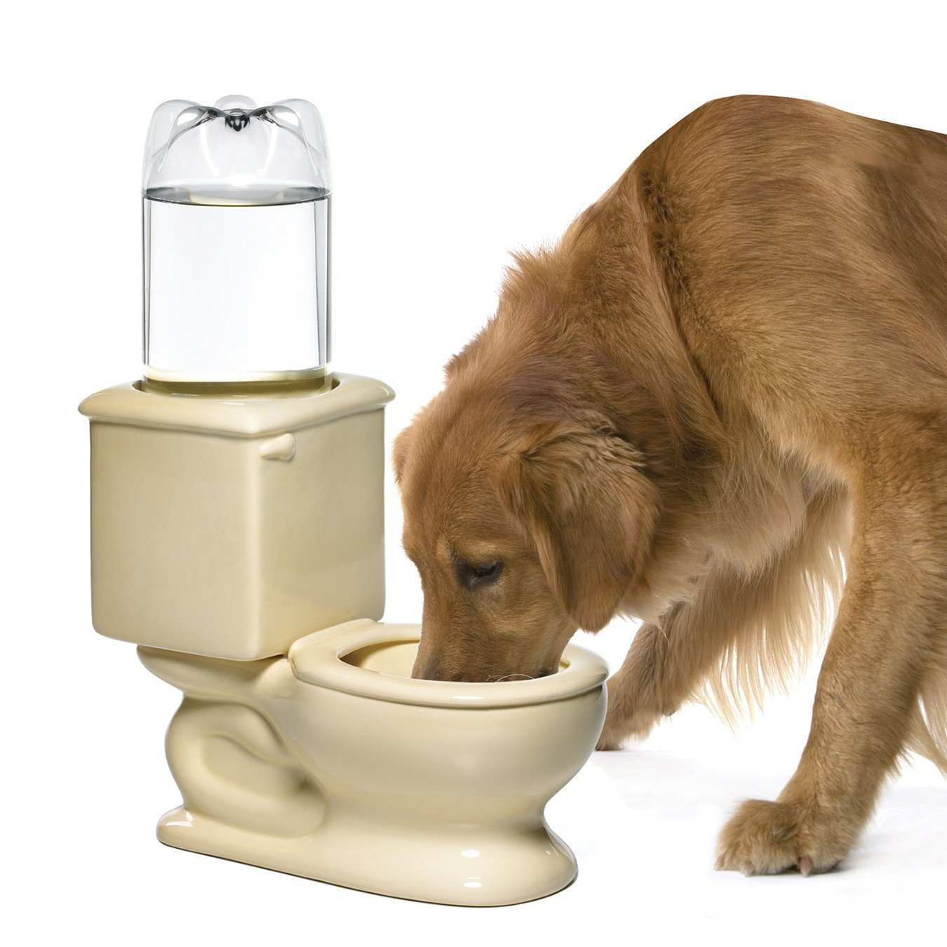 Different Toilet Water Bowl for Pets Home Designing