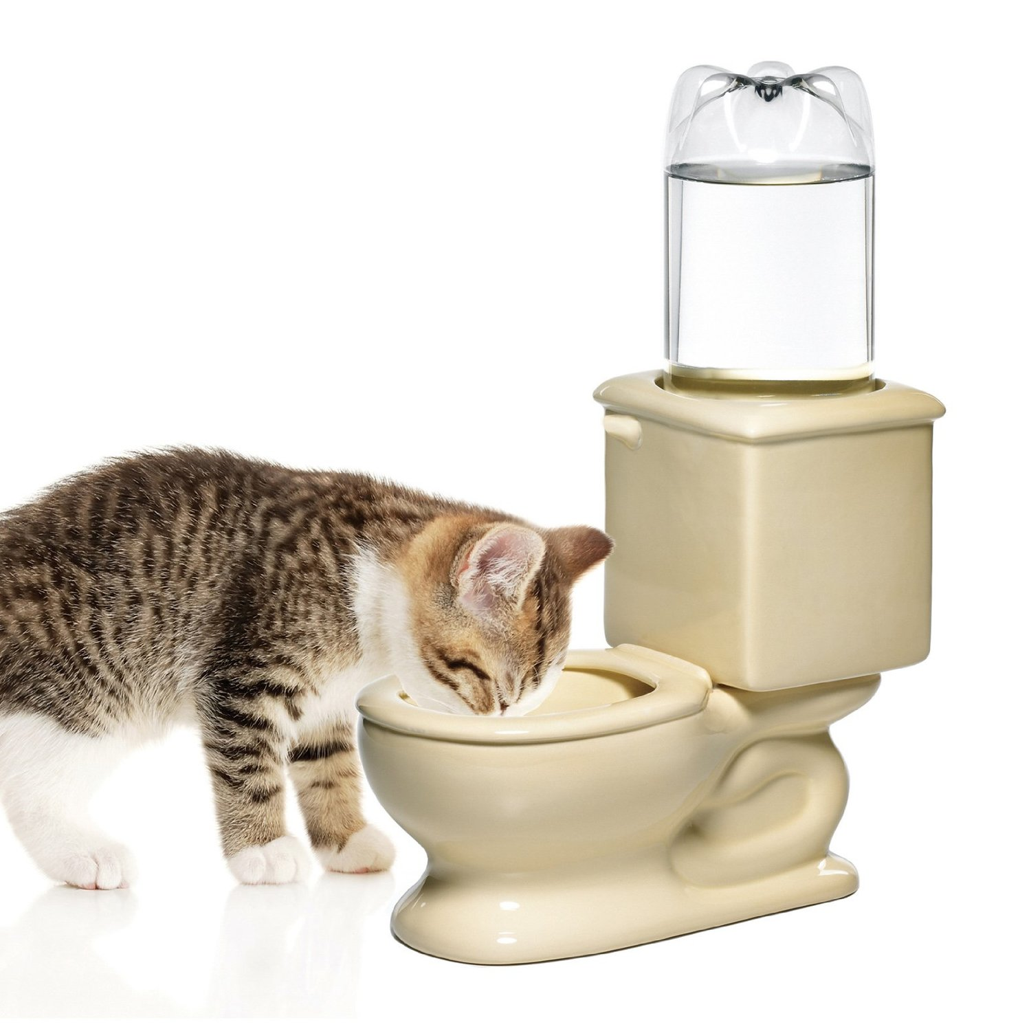Water Bowl for Cat