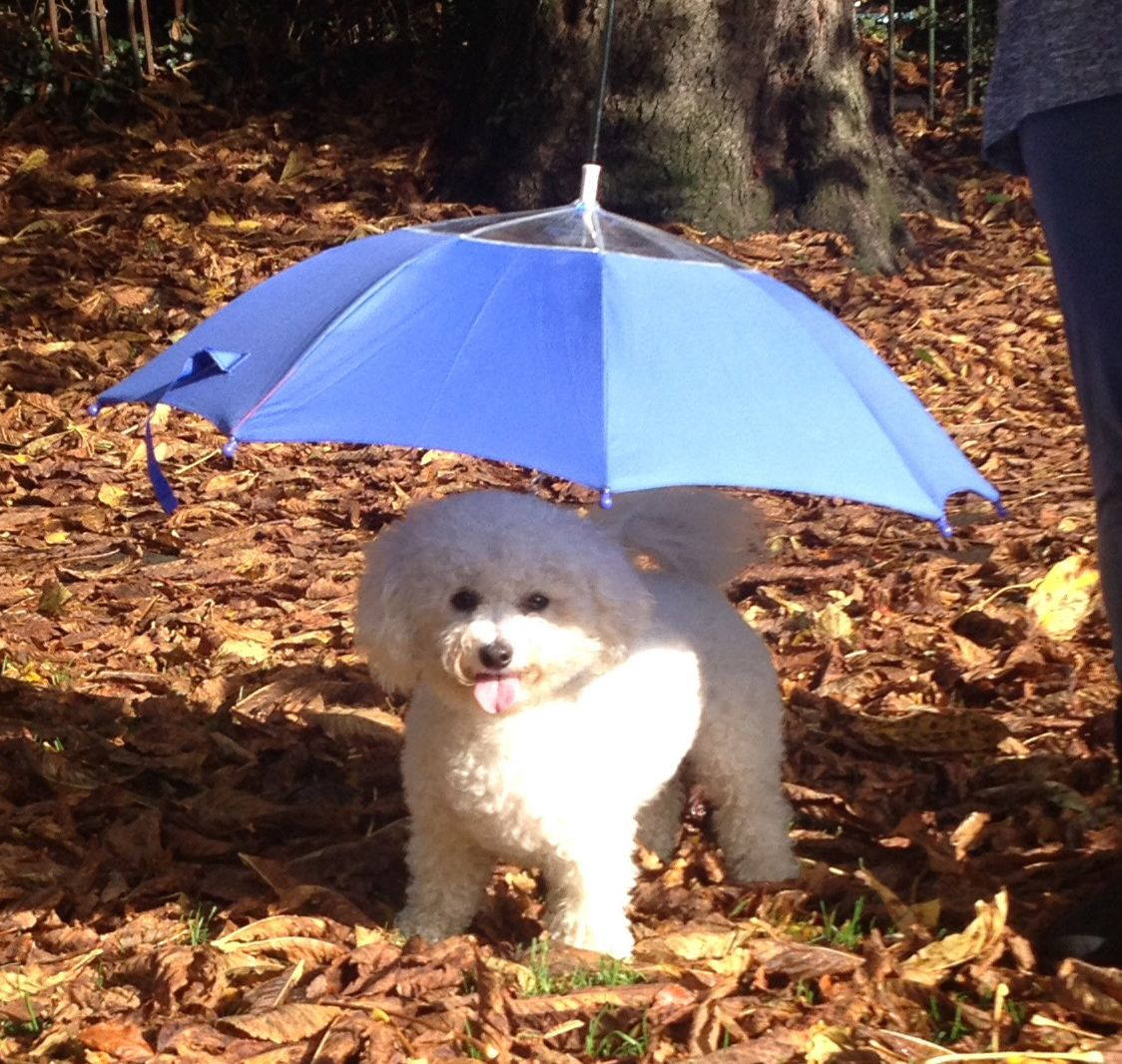 Comfortable Pet Umbrella
