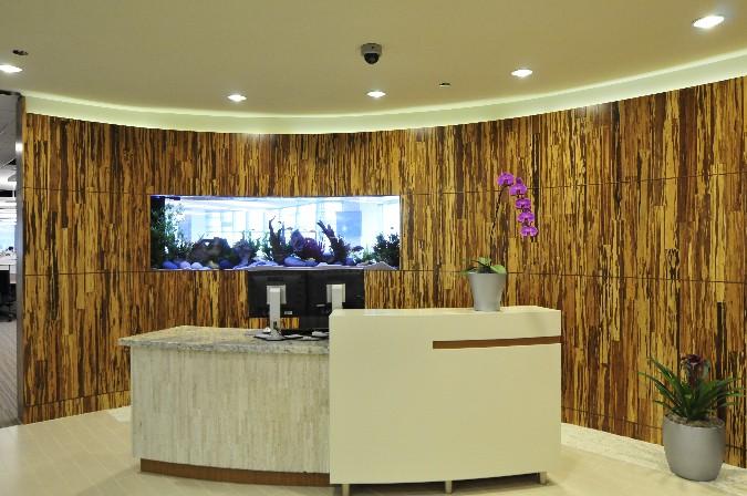 Aquarium Designs for Home