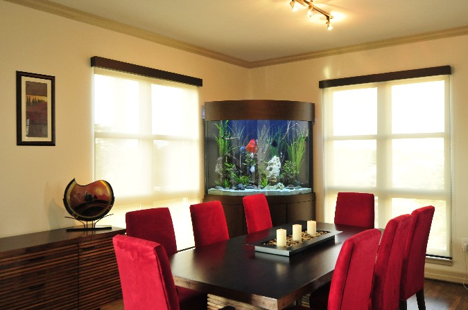 Aquarium for Office Room