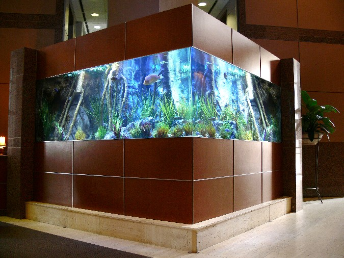 Aquarium patterns for home office home designing for Large aquarium fish
