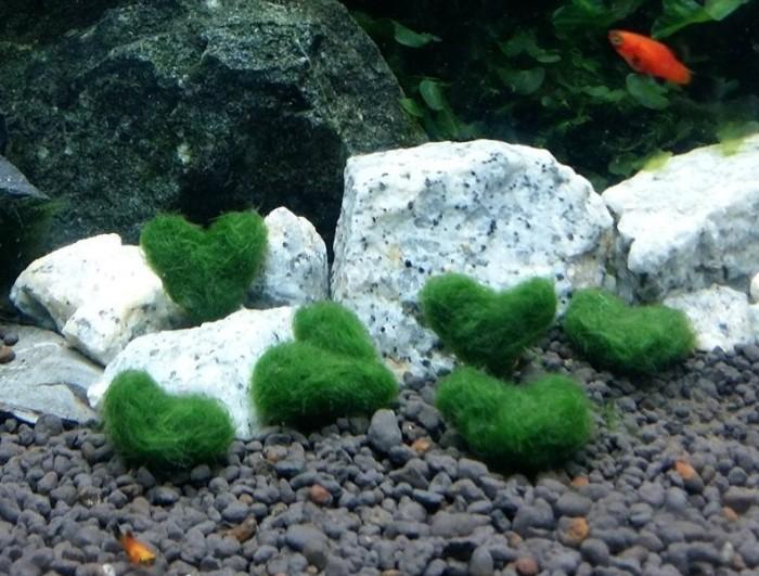 Luffy Heart Moss ball Plant Gift