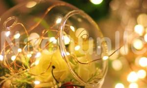 DIY Terrarium String Light Lamp