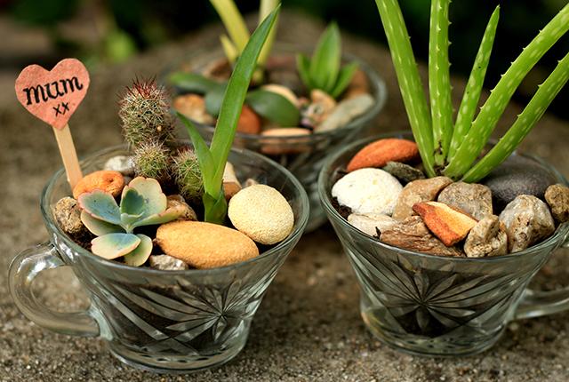 Mini succulent gardens for Mom