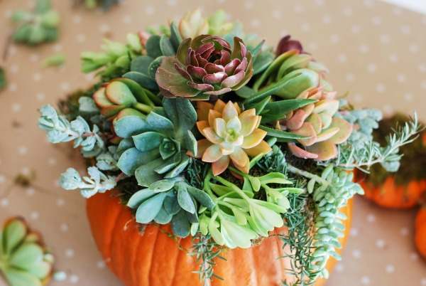 Pumpkin Succulent Harvest Decor