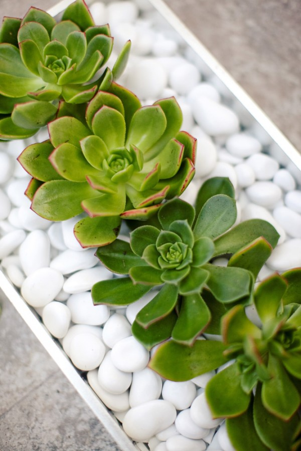 Stones and Succulent Decor