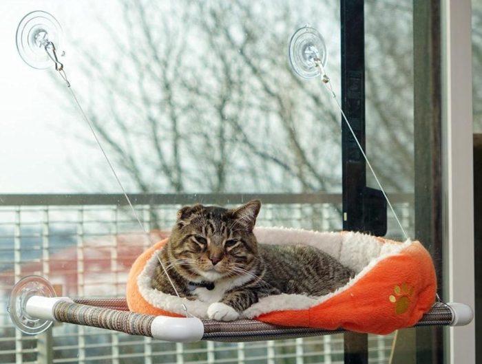 Best Outdoor Cat Perch