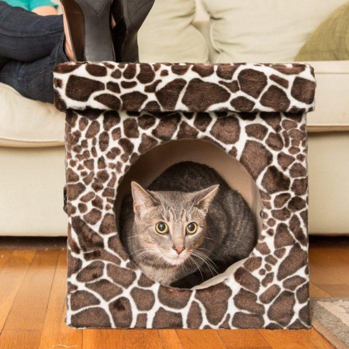 Kitty Zen Den