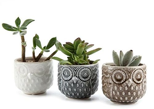 Eye-Catching Owl Pattern Planters