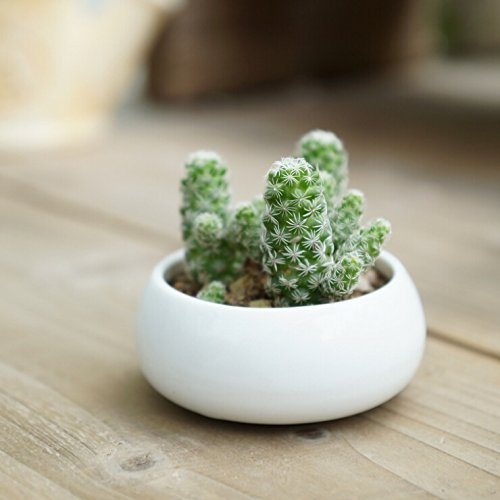 White Mini Ceramic Planter