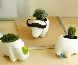 32 Cute & Interesting Mini-Pots / Succulent Planter