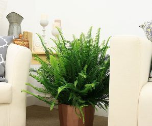 25 Best Low Maintenance House Plants